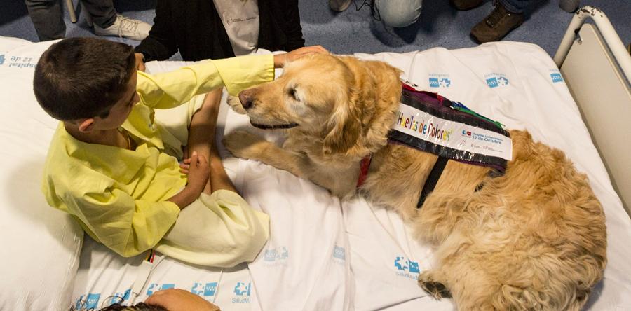 El Hospital 12 de Octubre pionero en aliviar el dolor de los niños ingresados con perros
