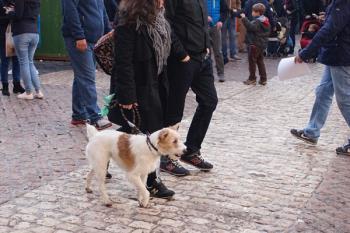 Multas de hasta 600 euros en Coslada por no recoger los excrementos de tu mascota o llevarla sin seguridad