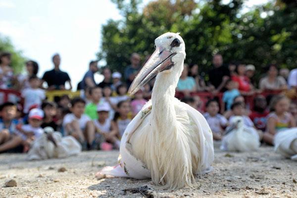 20 cigüeñas han echado a volar en Alcalá de Henares