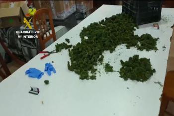 Un entramado empresarial logró sembrar cientos de hectáreas de marihuana ilegal como si fuese CBD