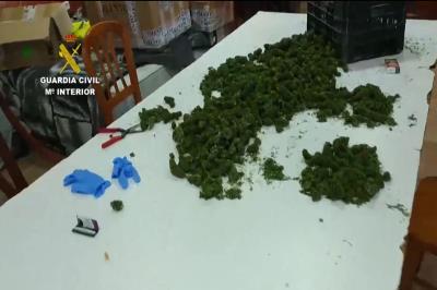 Lee toda la noticia '52 plantaciones de cannabis desmanteladas por la Guardia Civil en diferentes comunidades'