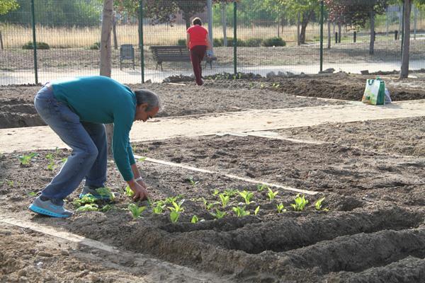Leganés pone 65 huertos urbanos a disposición de sus mayores