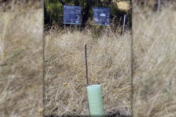Ecologistas en Acción indica que se han plantado fuera de época óptima y que les falta riego