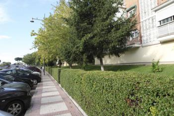 Las especies vegetales están destinadas a embellecer zonas verdes públicas y comunales