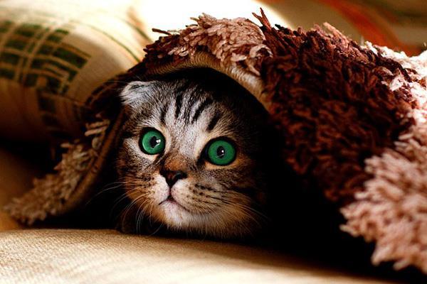 Sigue estos consejos para mantener cálida a tu mascota cuando llegue el frío