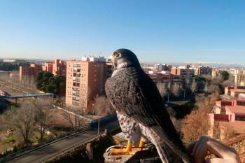 Nuestro municipio cuenta con 500 especies diferentes en Los Cerros y 300 en el río Henares