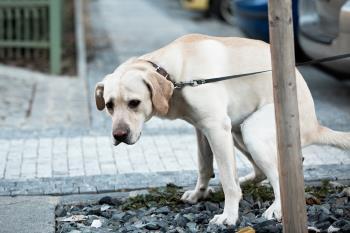 Además, todas las personas con perros de Alcalá, deberán censar a su perro mediante huella genética