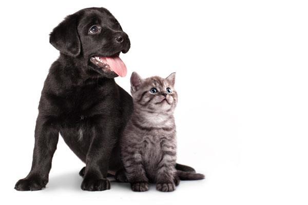 Alcorcón incrementa el número de adopciones de animales