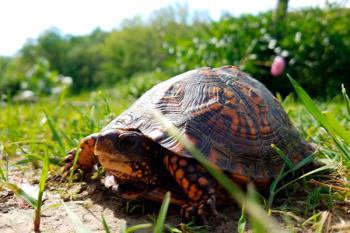 Esta pequeña mascota es ideal para dar el primer paso en el cuidado de los reptiles