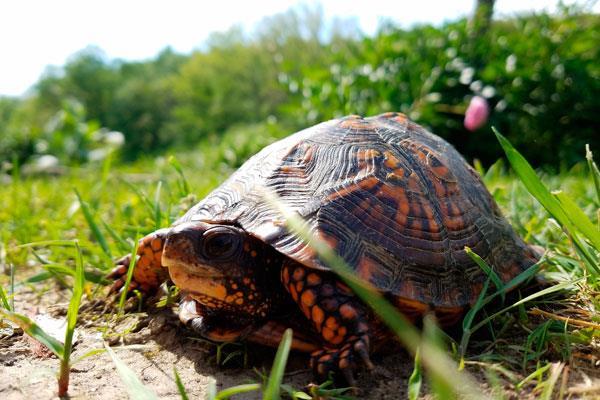 Aprende a cuidar a tu tortuga de tierra