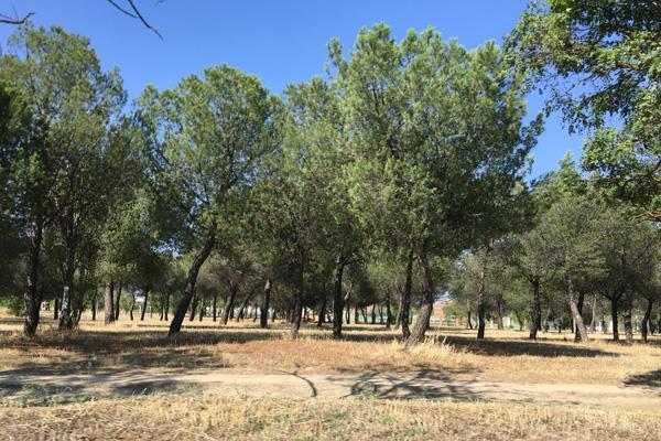 Getafe aumenta el presupuesto y el personal para los parques y jardines