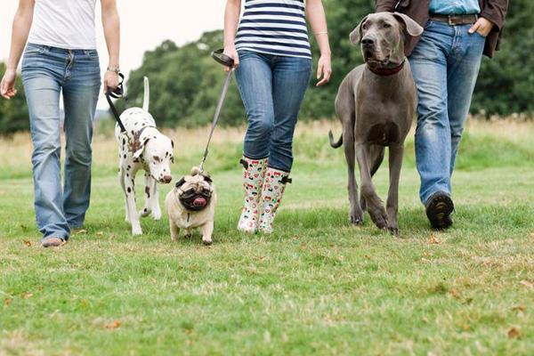 Boadilla podría contar con un Centro Municipal de Protección de Animales