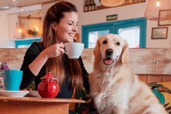 Bares, Terrazas y Hoteles en los que los animales pueden disfrutar junto a sus dueños