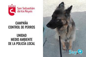 La Policía Local ha iniciado una campaña para vigilar que los dueños de perros cumplen la normativa