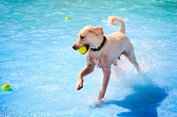 Con motivo del último día de baño, estos ayuntamientos abrirán sus piscinas municipales a nuestras mascotas de forma gratuita