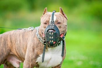 La policía getafense pone en marcha una campaña dirigida a los dueños de esta catalogación de perros