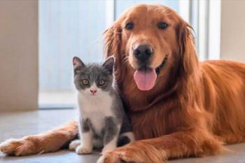 La Comunidad de Madrid ofrece una serie de recomendaciones para el especial cuidado de nuestros animales