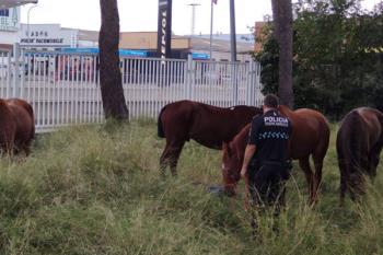 La Policía Local de Fuenlabrada se encargó de despejar la zona