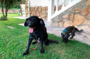 Una alternativa a las residencias caninas que está triunfando entre los dueños este verano
