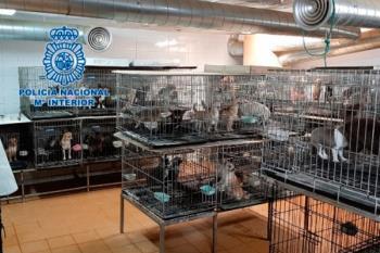 270 perros han sido rescatados, algunos de ellos con las cuerdas vocales cortadas