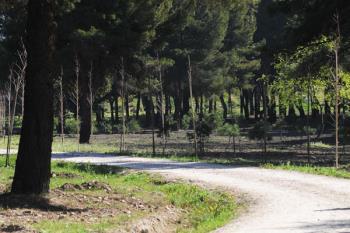 Un bosque de 75 kilómetros rodeará la capital para absorber 170.000 toneladas de CO2