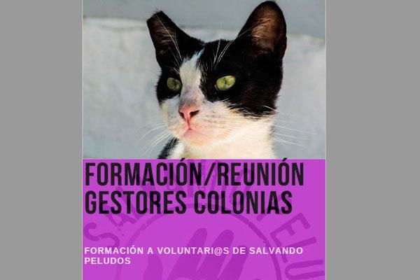 El CPA de Arroyomolinos pone en marcha el proyecto `Gatos de la Calle´