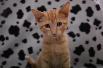 """El Centro de Protección Animal de Arroyomolinos continua con el proyecto """"Gatos en la Calle"""" Los felinos disfrutarán de comida y refugio en las casetas que ya han sido instaladas por el Ayuntamiento"""