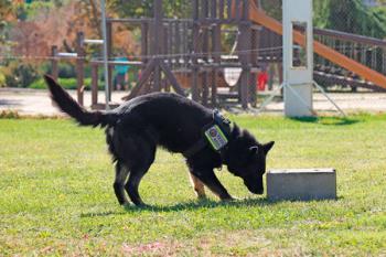 Ambos canes, un macho y una hembra, serán adiestrados para buscar estupefacientes, billetes y armas