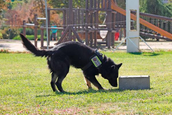 El Cuerpo de Policía de Móstoles suma dos cachorros de Pastor Alemán
