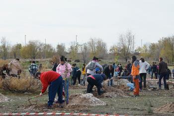 Cientos de vecinos se trasladaron hasta la zona quemada con el objetivo de plantar especies locales
