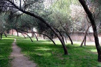 La plantación tendrá lugar en otoño y está destinada a incrementar la biodiversidad