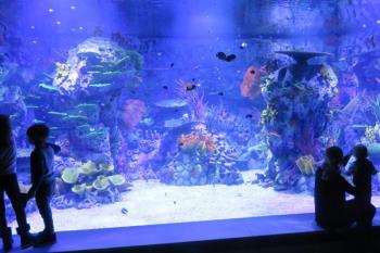Parques Reunidos abre el primer acuario interactivo de Europa el Centro Comercial intu Xanadú