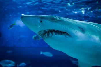 Atlantis Aquarium Xanadú, celebra su particular Halloween 2019 para combatir el cambio climático