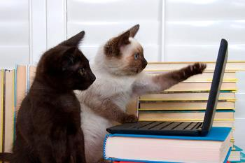 ¿Sabías que la compañía de estos felinos reduce el estrés e incrementa la productividad en el trabajo?