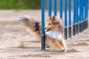 El Ayuntamiento de Getafe ha comenzado las obras del nuevo parque para perros