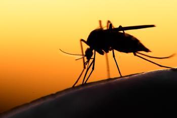 El municipio ha doblado los tratamientos contra los mosquitos en Perales del Río