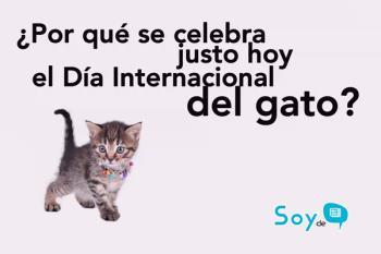¿Sabías por qué nuestras mascotas felinas tienen hoy su día especial?