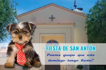El 17 de enero se celebra en nuestro municipio San Antonio Abad, patrón de los animales