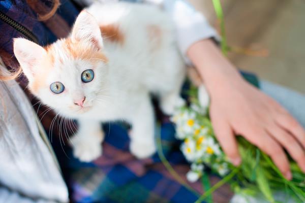 I Feria por la Sensibilidad Animal  | Móstoles