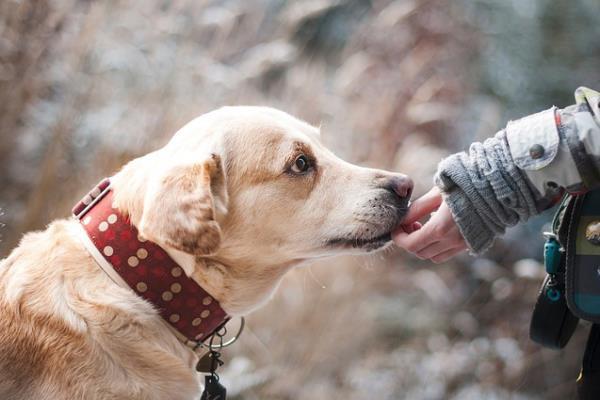 Kits de limpieza gratuitos para recoger los excrementos de tus mascotas