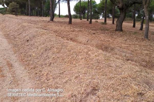 La Comunidad de Madrid realiza las tareas de prevención de incendios en el municipio