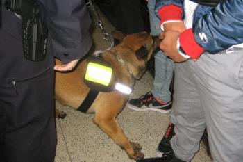 Las actuaciones se han producido en coordinación con Alcobendas y la Policía Nacional
