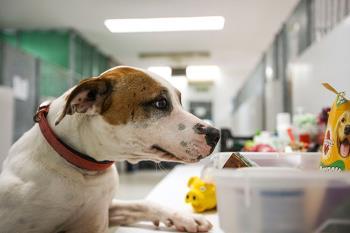 Para la atención integral de los perros que tengan que ser acogidos