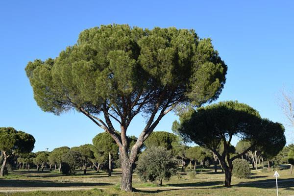 Las Rozas aprueba una propuesta de reforestación