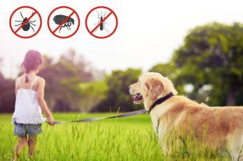 Con la llegada del calor, debemos proteger a nuestras mascotas de sus peligrosos efectos