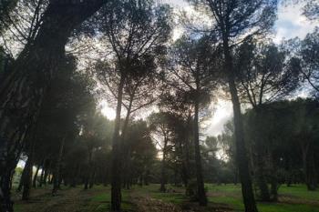 El Patronato ha llevado a cabo la poda de ramas secas en las últimas semanas