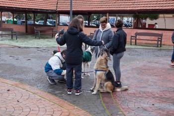 La adopción y los castigos por el maltrato animal, pilares de la nueva ordenanza