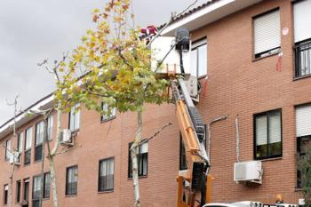 Un total de 3.732 árboles de la ciudad serán podados y se realizará un control fitosanitario en coníferas