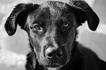 Un nuevo servicio de recogida de animales cubre el horario en que el Centro de Protección animal permanece cerrado
