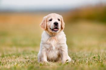 ¿Quieres educar a un cachorro para que el día de mañana se convierta en un gran perro guía?